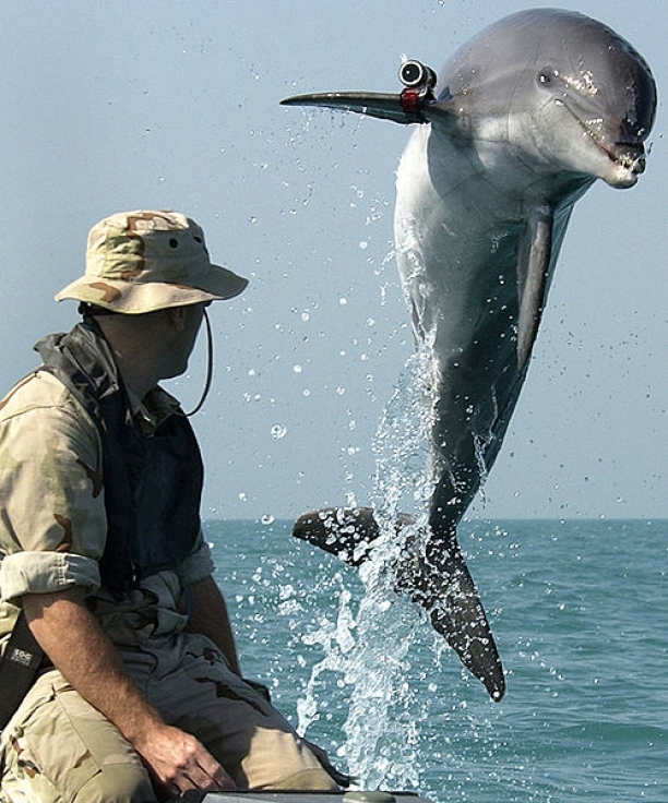 Dolphin Soldiers