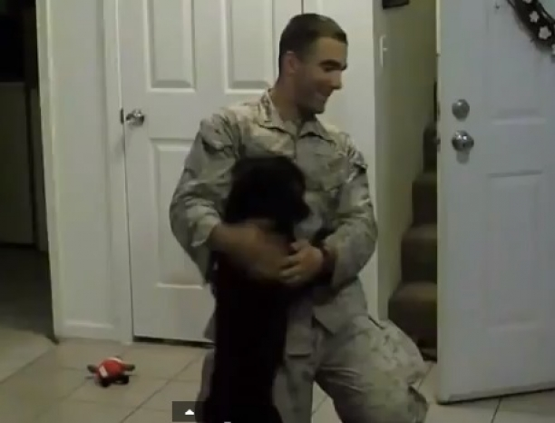 Happy Happy Joy Joy - Dogs And Their Soldiers