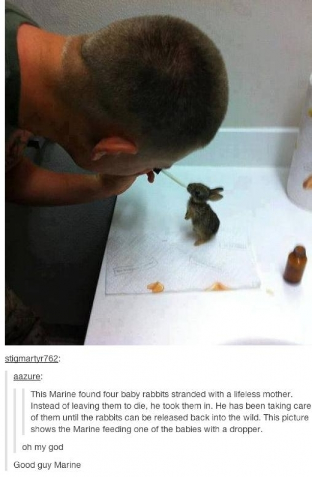 This Marine Found Baby Rabbits And What He Did Brings Tears To My Eyes