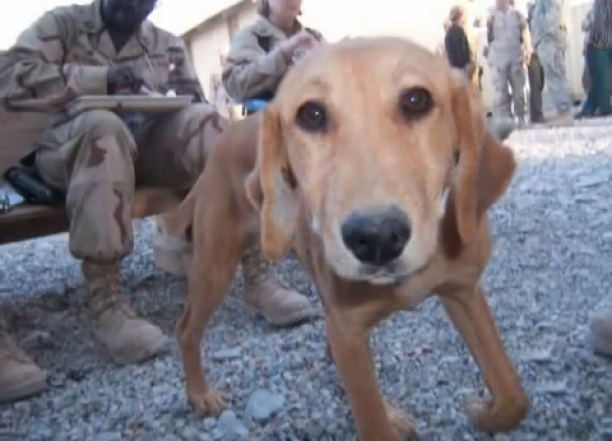 Saving Cinnamon - Afghanistan Puppy Rescue - True Story