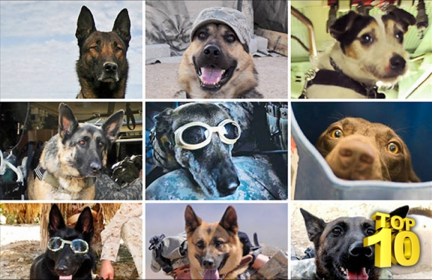 I Knew Dogs Were Used In Military, But This? I Have No Words For What They Are Capable Of.