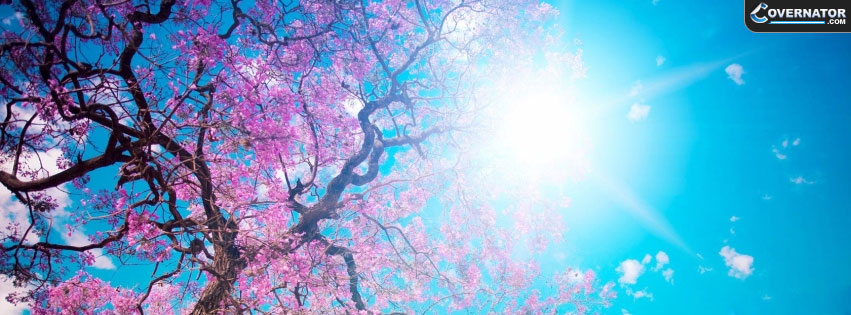 Japan trees Facebook cover