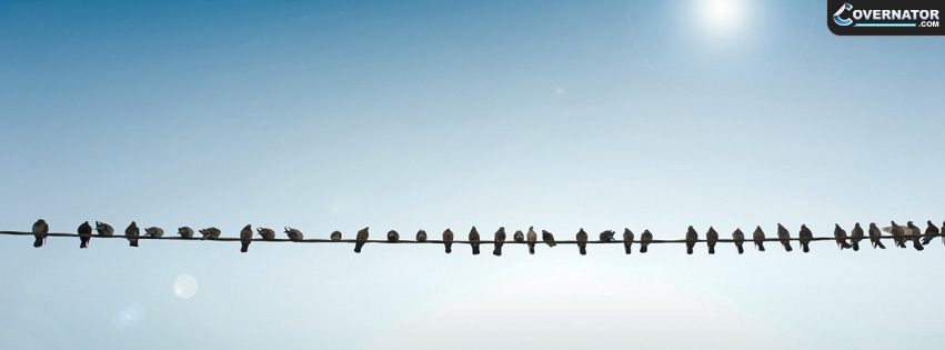 birds on wire Facebook cover