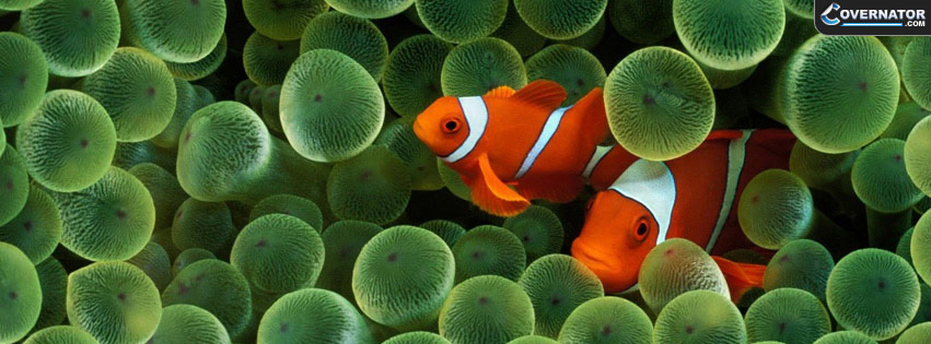clown fish Facebook cover