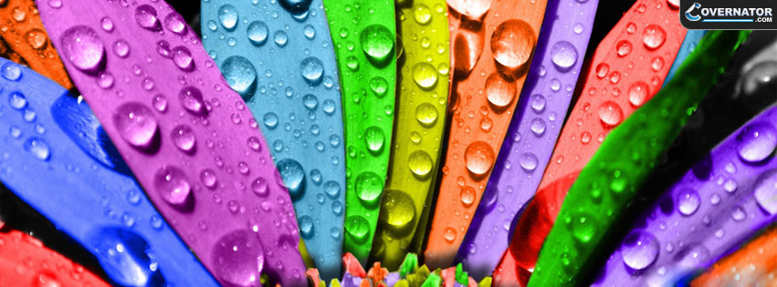 rainbow flower Facebook cover