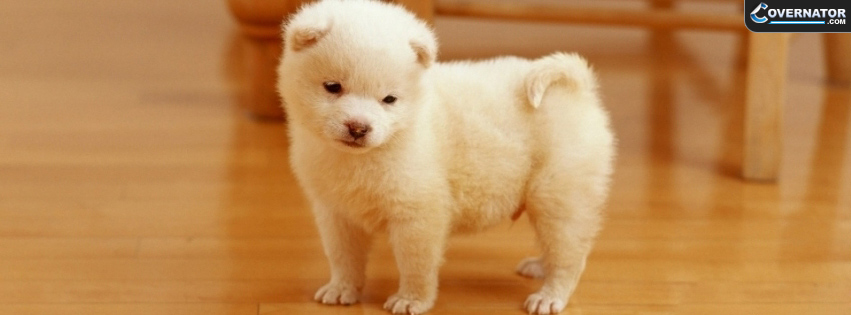 cute puppy Facebook cover