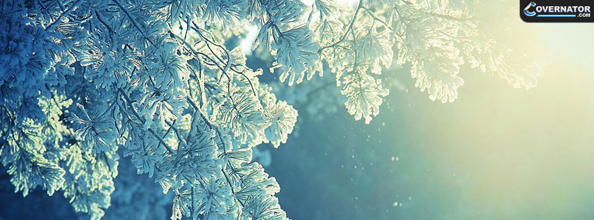 Winter tree Facebook cover