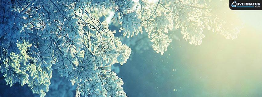 Winter Tree Facebook Cover