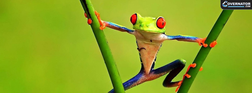 tree frog Facebook cover