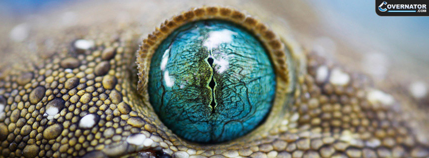 gecko Facebook cover