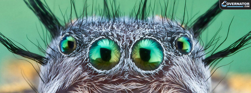 jumping spider Facebook cover