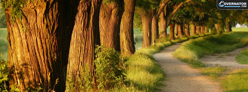 Tree Alley Facebook Cover