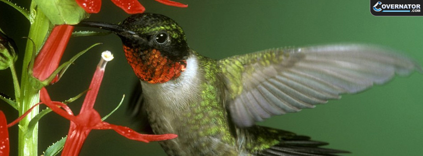 Hummingbird Facebook cover