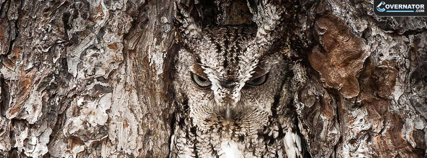 Owl Facebook Cover