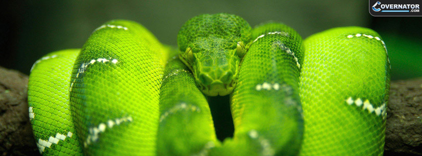 Tree Snake Facebook Cover